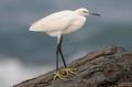 kokilin, playa de vargas, gran canaria photos, canary islands photos, islas canarias 2015 11 14