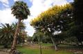 kokilin, canary islands photos, jorge navarro,